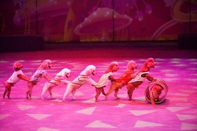 上海马戏城欢乐马戏五一假期演出安排